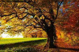 Herbst Atmosphäre